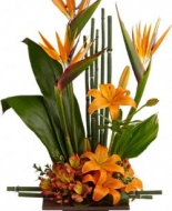 Birds of Paradise arrangement to send your Comfort